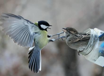 Фото Споры у кормушки