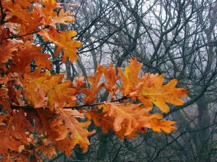 Фото С поздней осенью прощаясь
