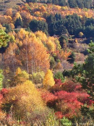 Фото Осень в Курортном парке