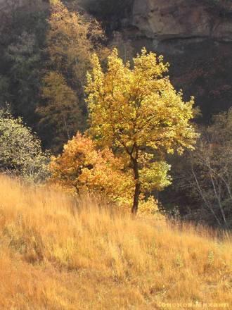 Фото Осень в Кисловодске