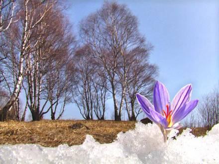 Фото Из под снега