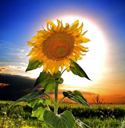 Фото Утомленный Солнцем