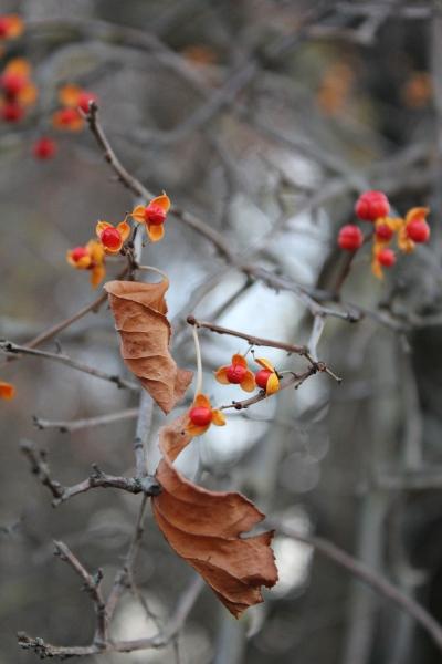 Фото Цветы Осени. Кисловодск