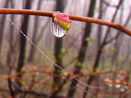 Фото После дождя...