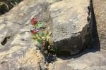 В камнях. Сила Жизни