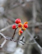 Цветы Осени. Кисловодск
